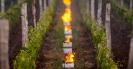 Heaters in vineyeards keeping vines warm