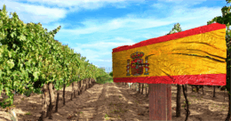 Spanish flag painted on wooden sign in vineyard