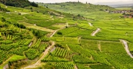 Aerial view of vineyards in Alsace