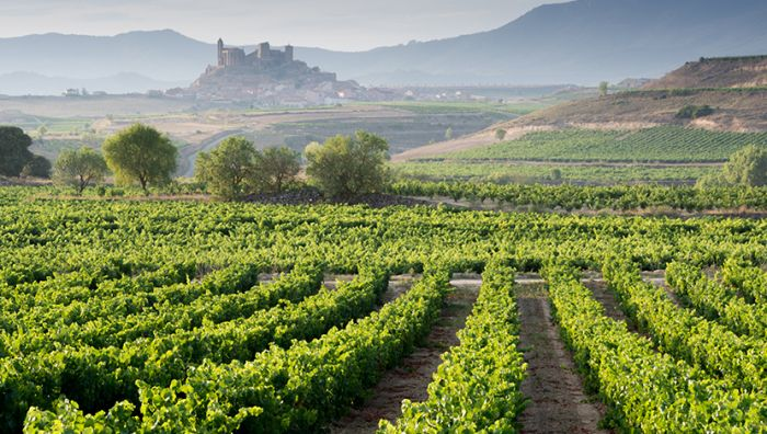 Rioja Wine Study Tour with Sarah Jane Evans MW