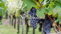 Nebbiolo, The king of Italian red grapes with Ciro Pirone