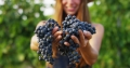 5 Trending Italian Red Grape Varieties