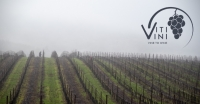 Vine to Wine: A Year of Viti/Vini - January