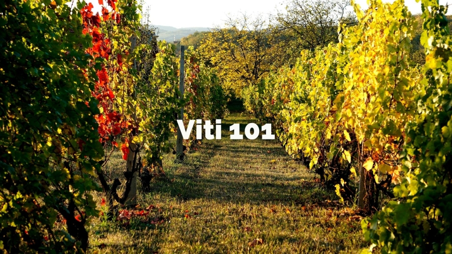 Viti 101: An Introduction to Viticulture with Tracy Kamens