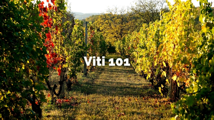 Viti 101: An Introduction to Viticulture