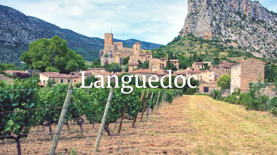 Languedoc in the 21st century with Rosemary George MW