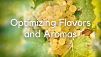 Optimizing flavors and aromas in wine grapes: A case study of Riesling