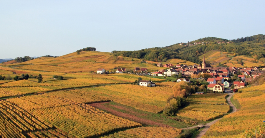 Learning and loving (without counting): a week in the hills and cellars of Alsace