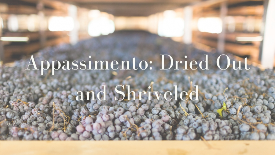Appassimento with Alan Tardi