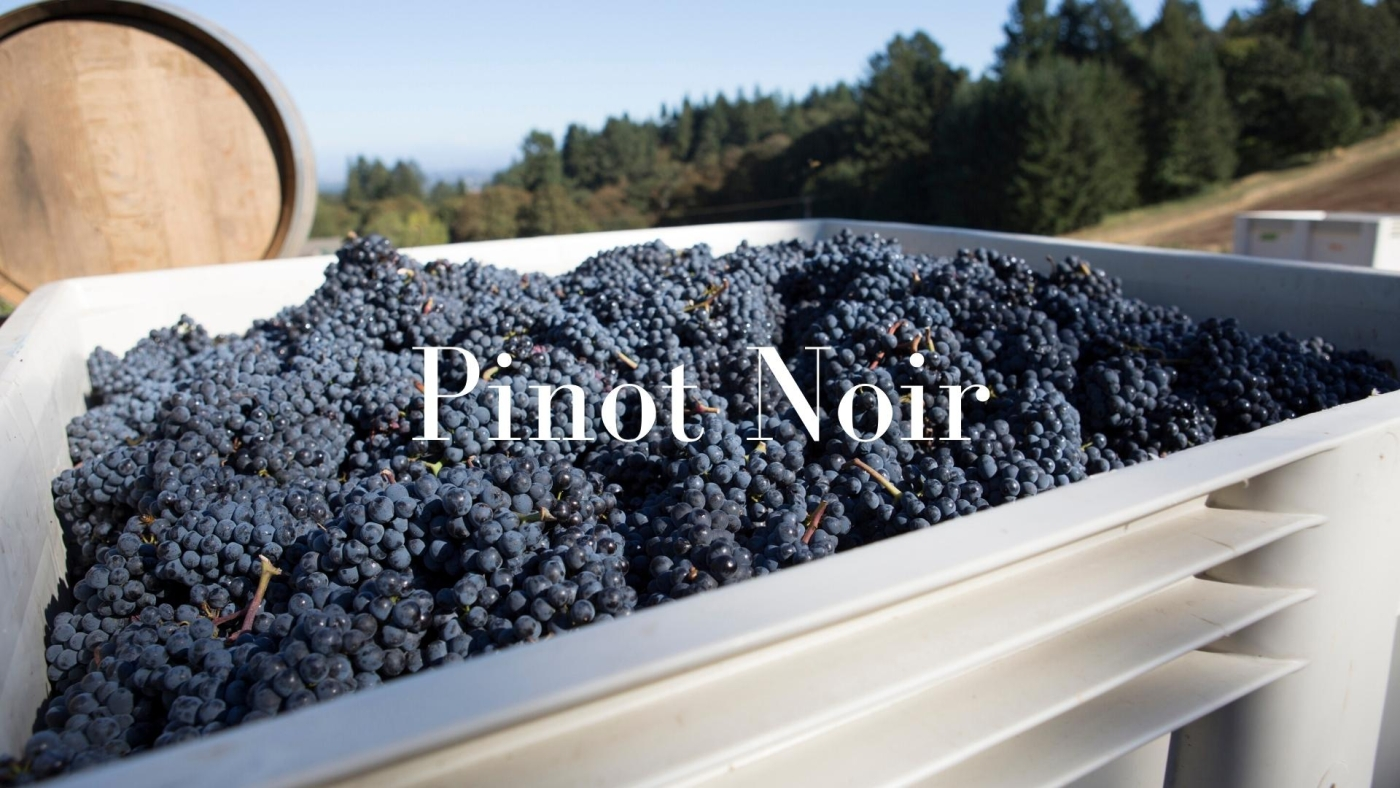 Pinot Noir: France's Great Grape - At Home in California with Karen MacNeil