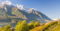 Focus - The Wines of Valle d'Aosta: Not Quite Italian, Not Quite French