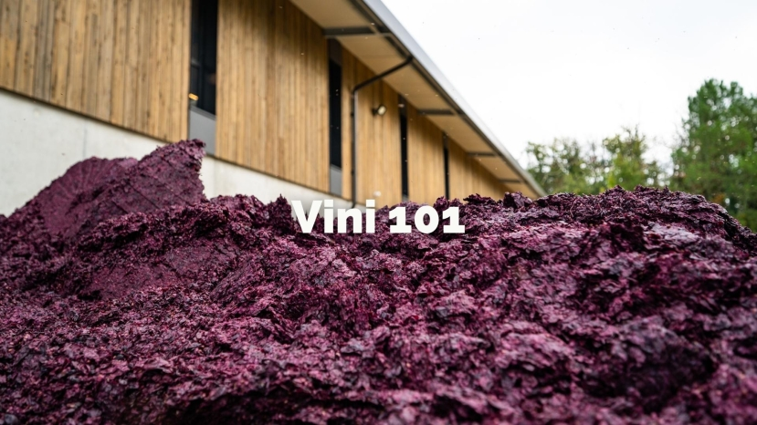 Vini 101: An Introduction to Vinification with Tracy Kamens