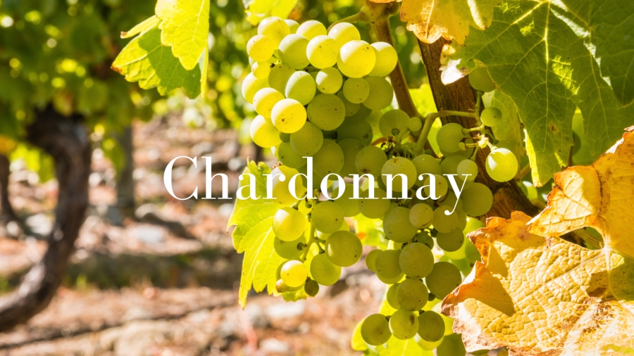 Undiscovered Diversity of Chardonnay with Christy Canterbury, MW