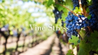 Vine Stress with Christy Canterbury MW