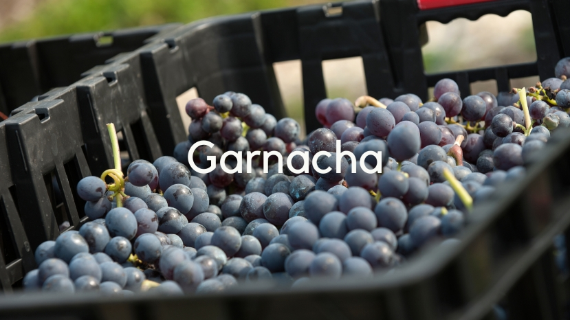 Garnacha: Rooted in Spain with Pedro Ballesteros Torres MW
