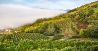Ten Fascinating Wines to Look Out for from South West France