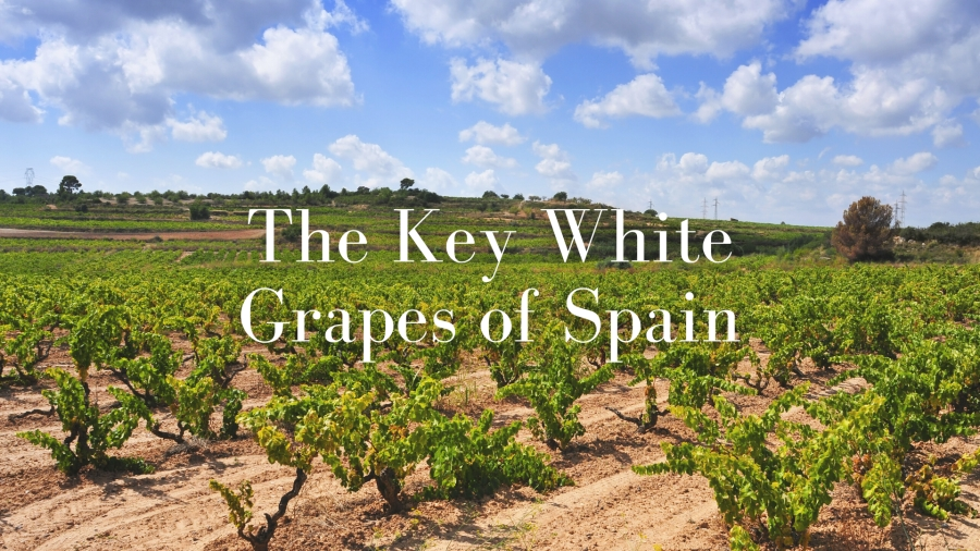 The Key White Grapes of Spain with Lucas Payà