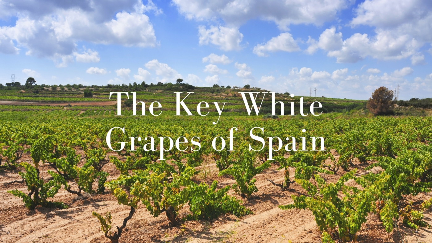 The Key White Grapes of Spain with Sommelier Lucas Paya
