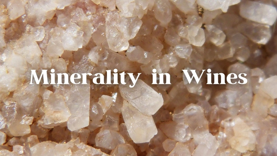 Minerality in Wine with Alex Maltman
