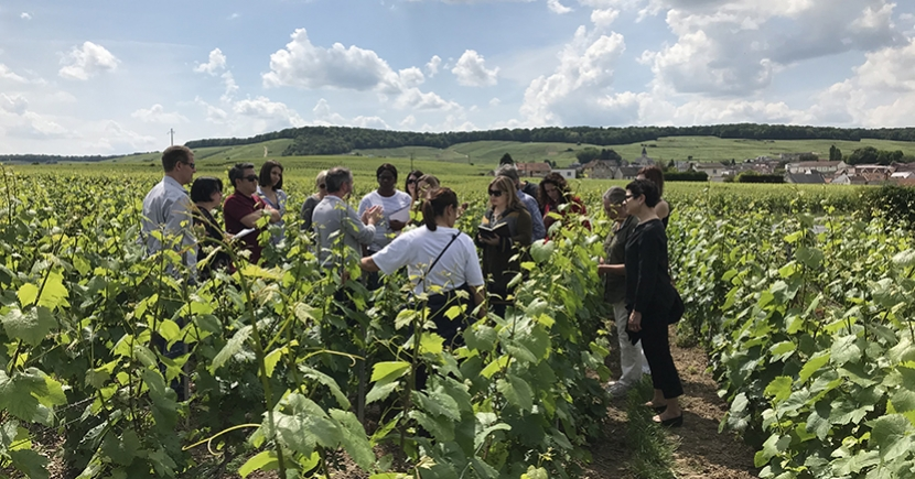 Champagne Immersion Study Tour with Charles Curtis, MW (June 2019)