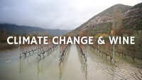 Climate Change and Wine with Roger Bohmrich MW