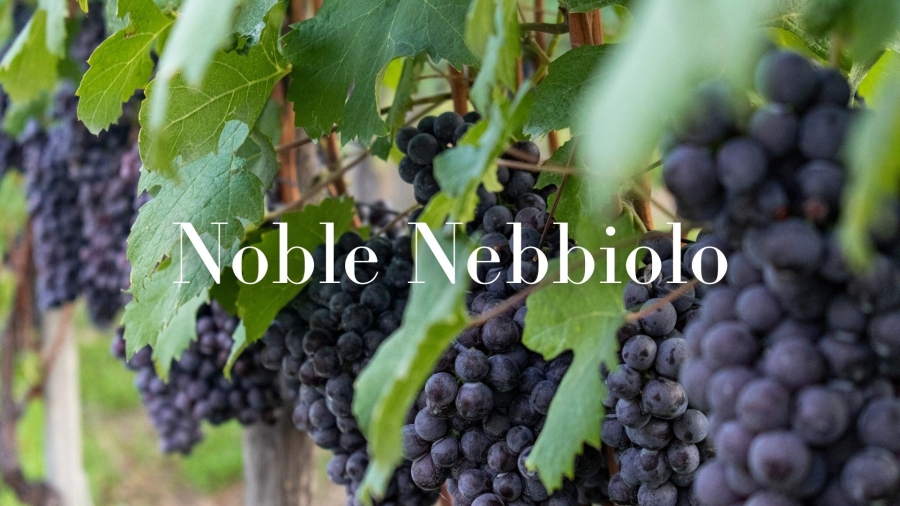 Noble Nebbiolo with Alan Tardi