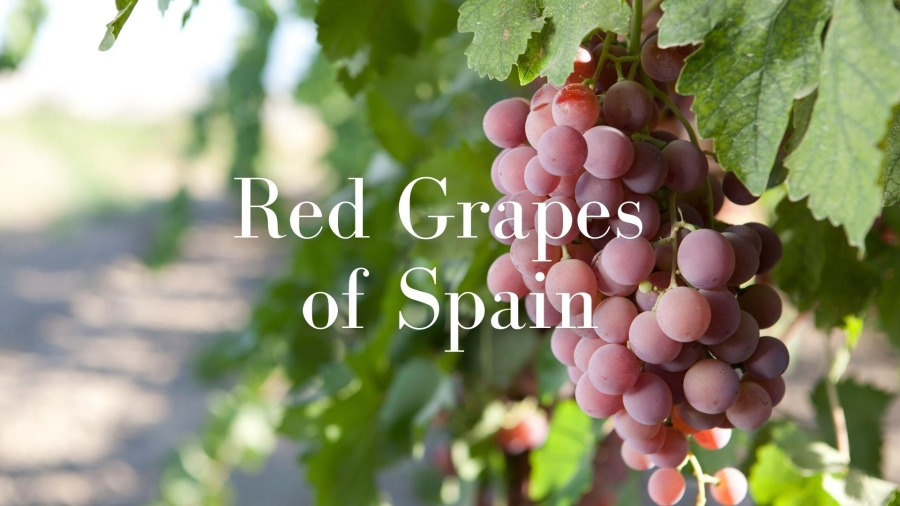 The Key Red Grapes of Spain with Lucas Payà