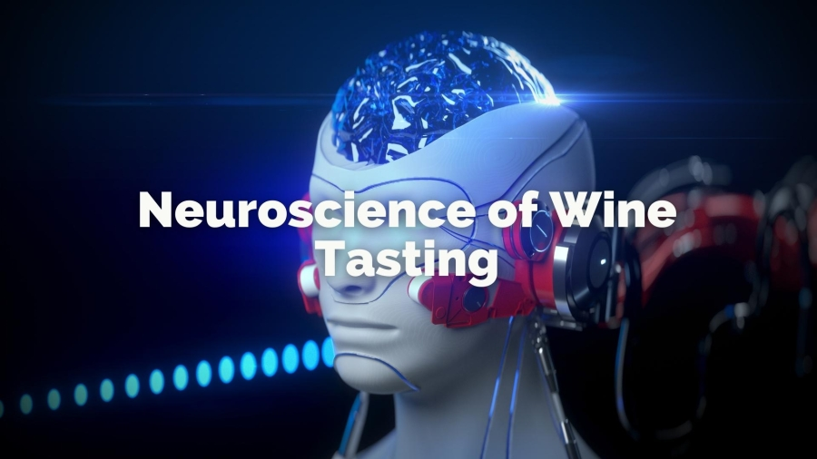 The Neuroscience of Wine Tasting: How the Brain Makes Sense of Wine Sensory Attributes with Gabriel Lepousez