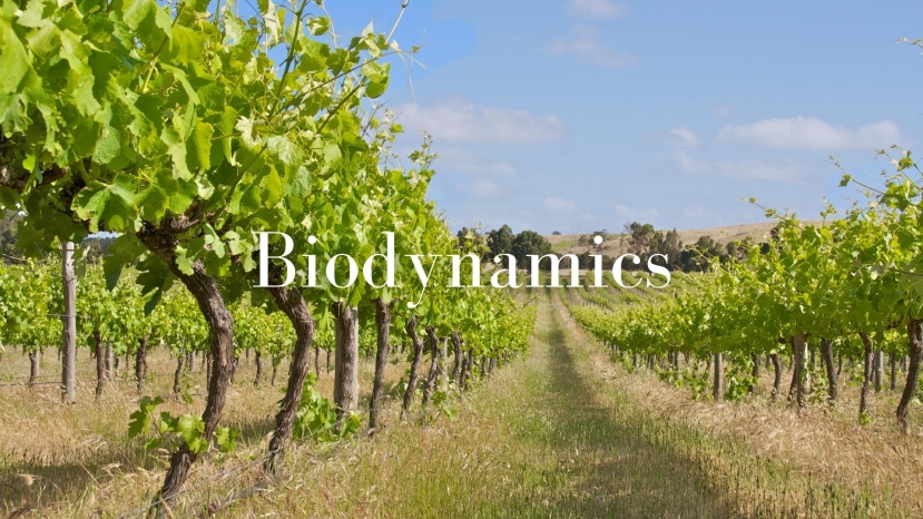 The Biodynamic View of the Solar System with Lisa Airey, CWE, FWS