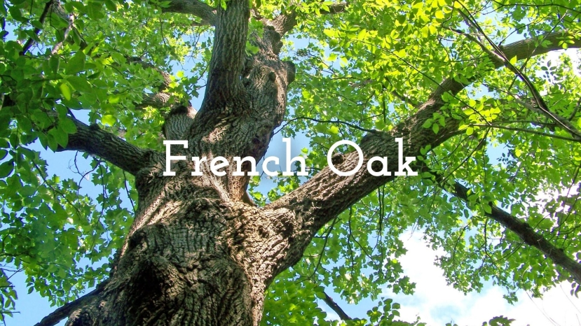French Oak: Forests, Coopers and Techniques with Roger Bohmrich MW