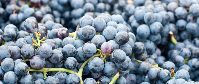 Think you know Lambrusco? Think again!