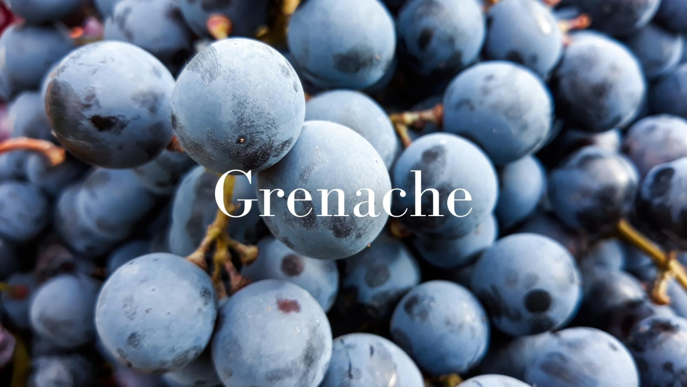 Grenache: the little grape that could with Jay Youmans MW