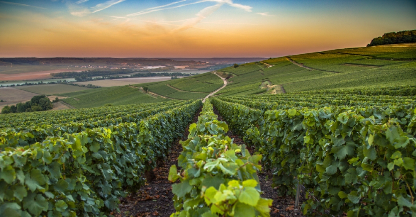 Champagne Wine Study Tour with Essi Avellan, MW (Oct. 2019)