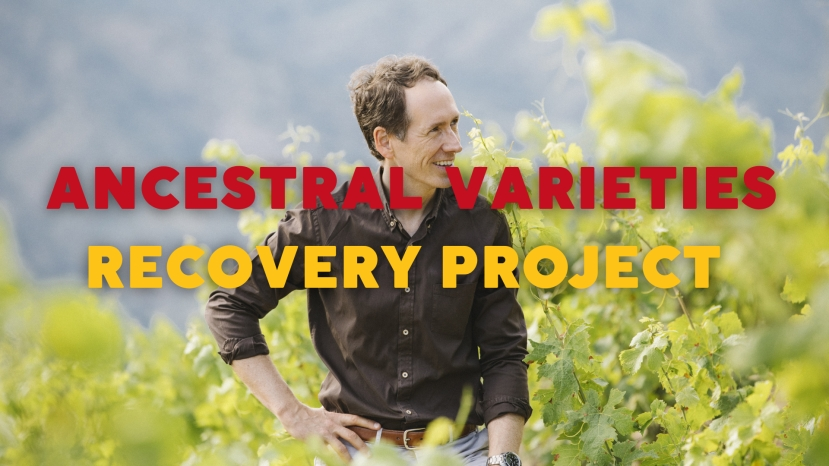 The Torres Ancestral Varieties Recovery Project with Miguel Torres