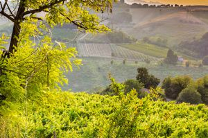 Italian Wine Regions - Introduction to Emilia-Romagna