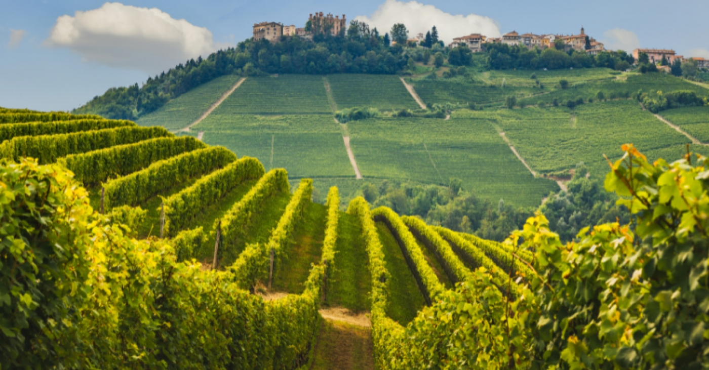 Piedmont Wine Study Tour with Kerin O'Keefe