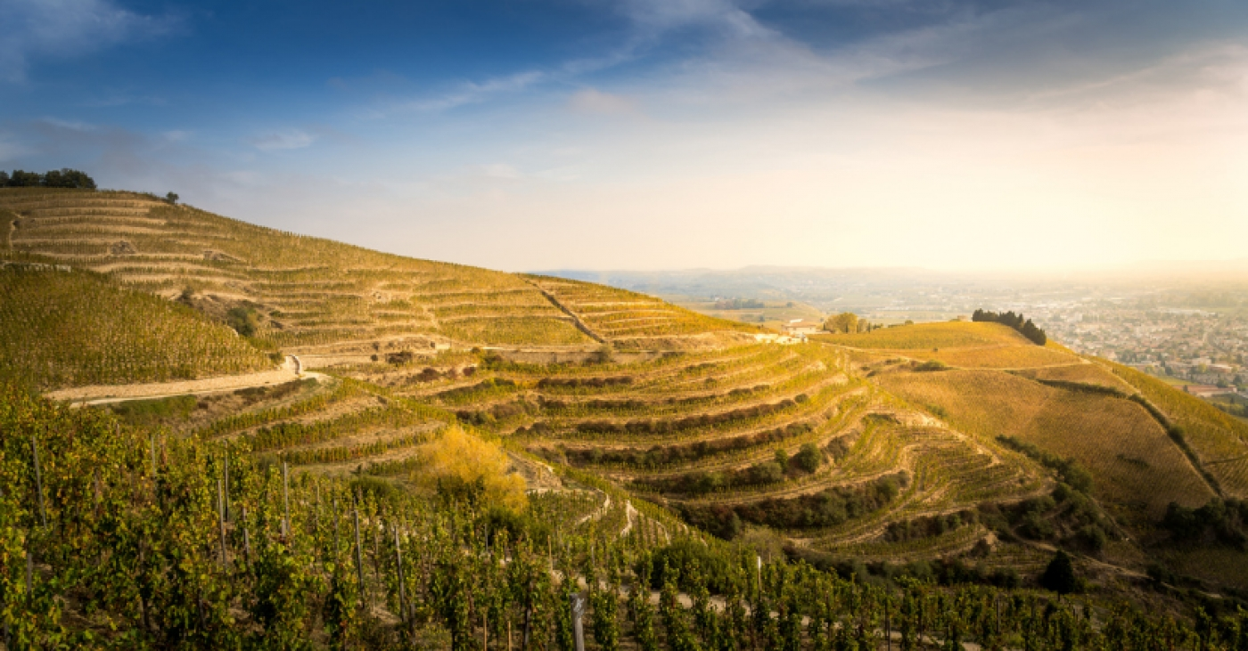 Rhône Wine Study Tour with Christophe Tassan