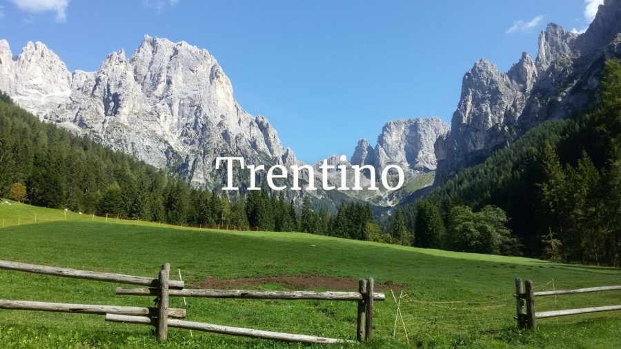 Exploring the Wines of Trentino with Roberto Anesi