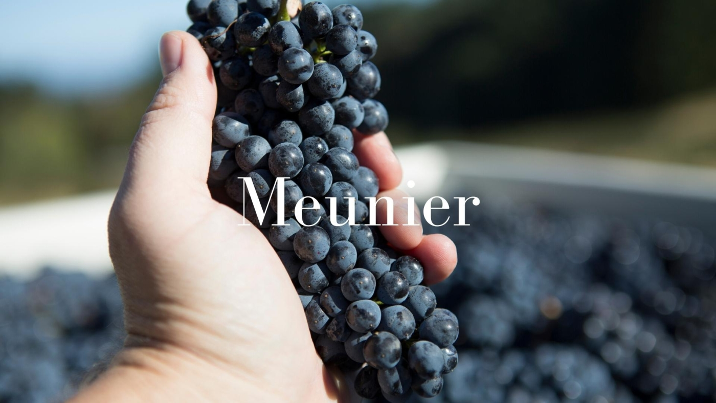 Meunier: The Black Sheep of Champagne with Alan Tardi