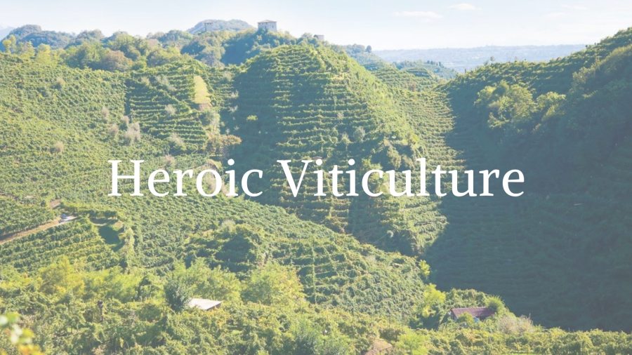 Heroic Viticulture: Europe's Most Dramatic Vineyards with Tanya Morning Star Darling