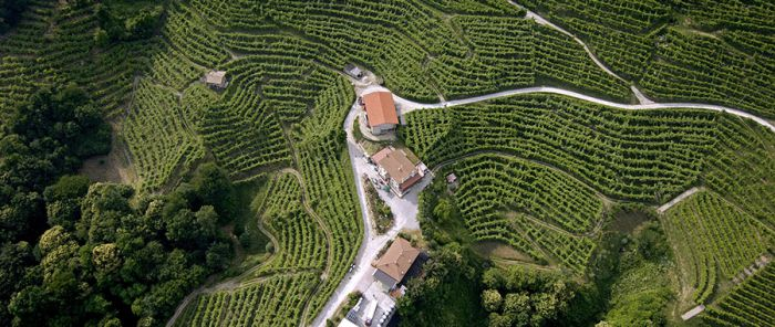 Veneto's wine production by the numbers