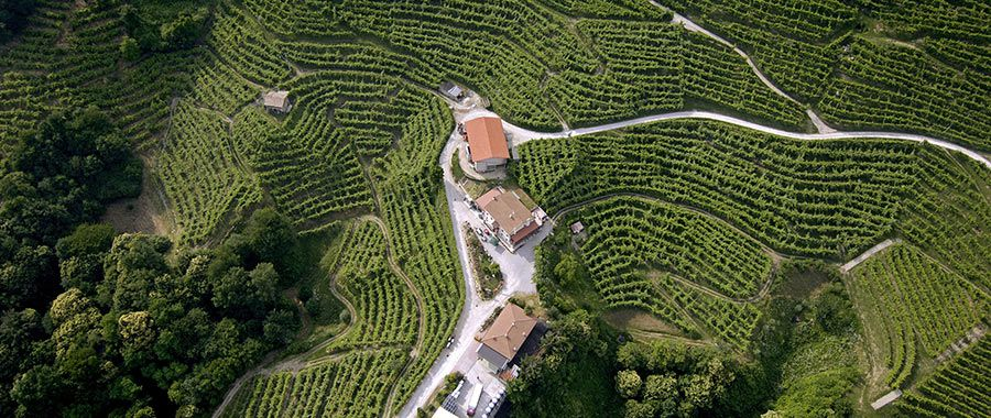 Veneto Wine Production