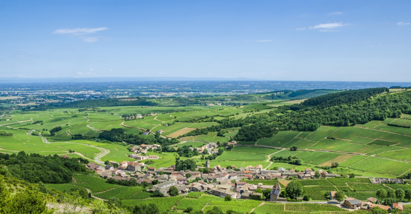 Wine Trends in 2020: Burgundy by the Numbers