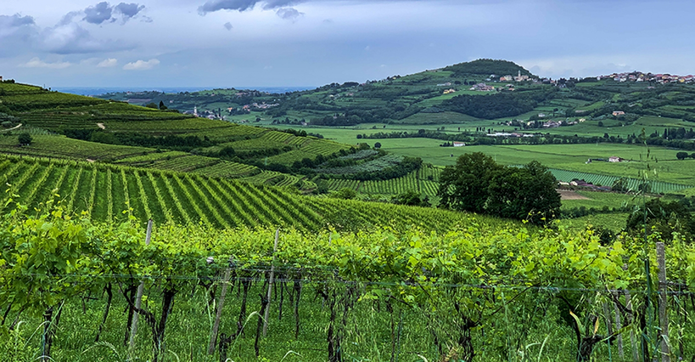 Valpolicella vineyards in Mezzane di Sotto (photo credits: Jesse Filipi)