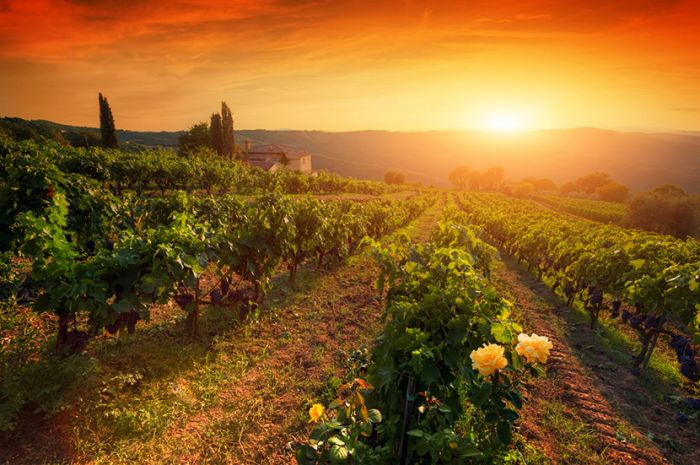Tuscany Wine Study Tour with Jane Hunt, Master of Wine