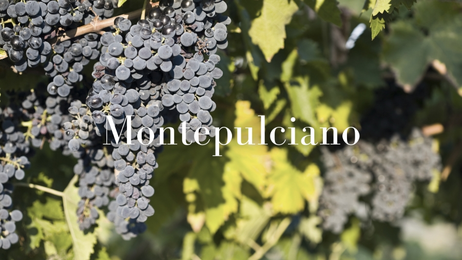 History, origin and all about Montepulciano with Ciro Pirone