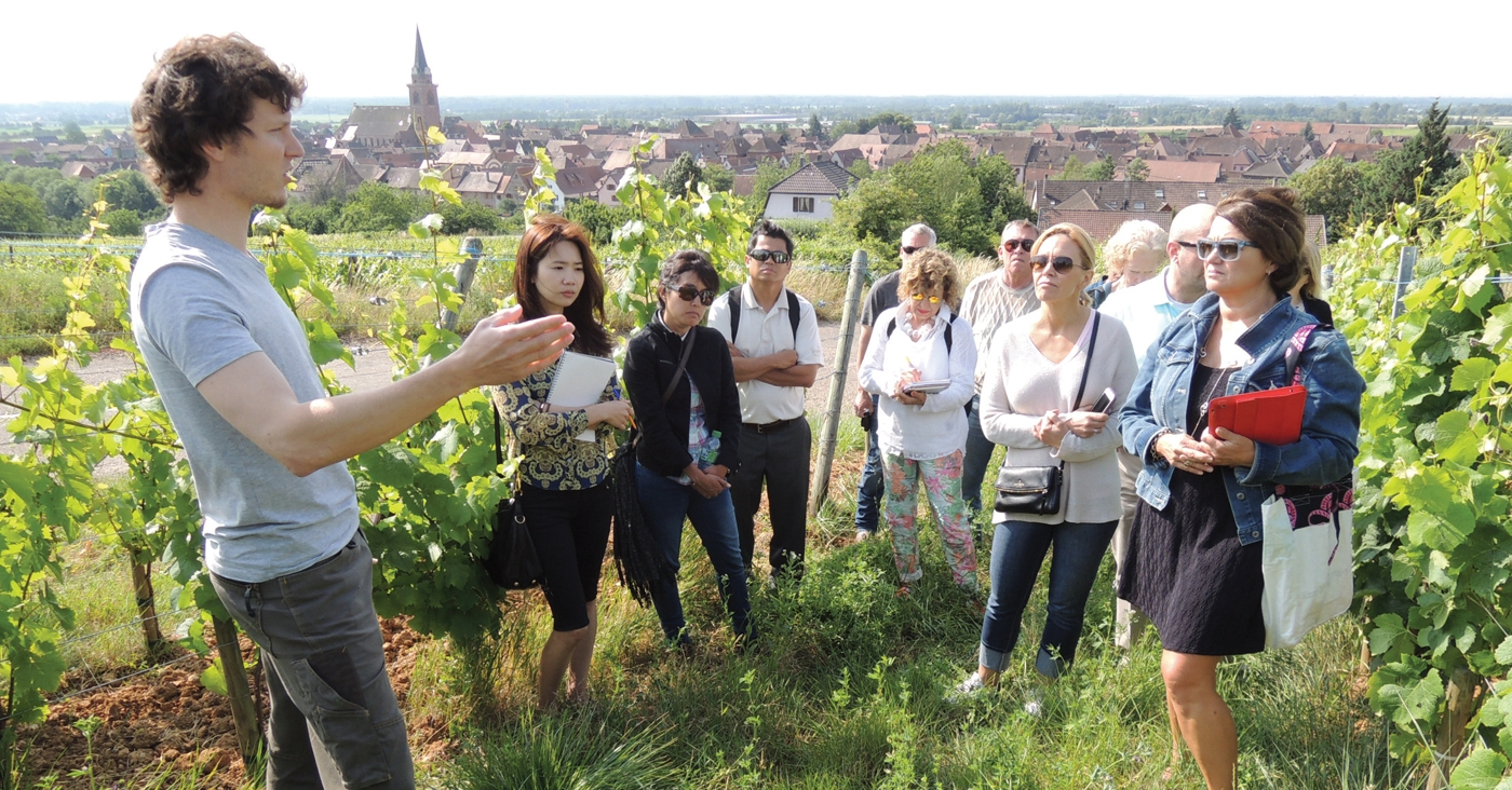 Alsace Wine Study Tour with Andrew Jefford