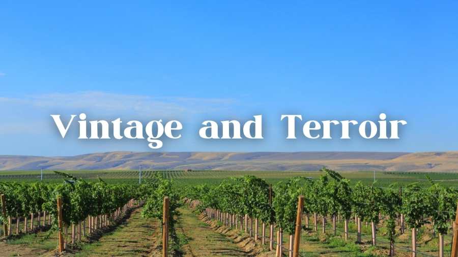 Bordeaux Vintage vs. Bordeaux Terroir with Dewey Markham, Jr.
