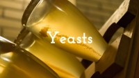 Cultured vs Indigenous Yeasts with Christy Canterbury MW