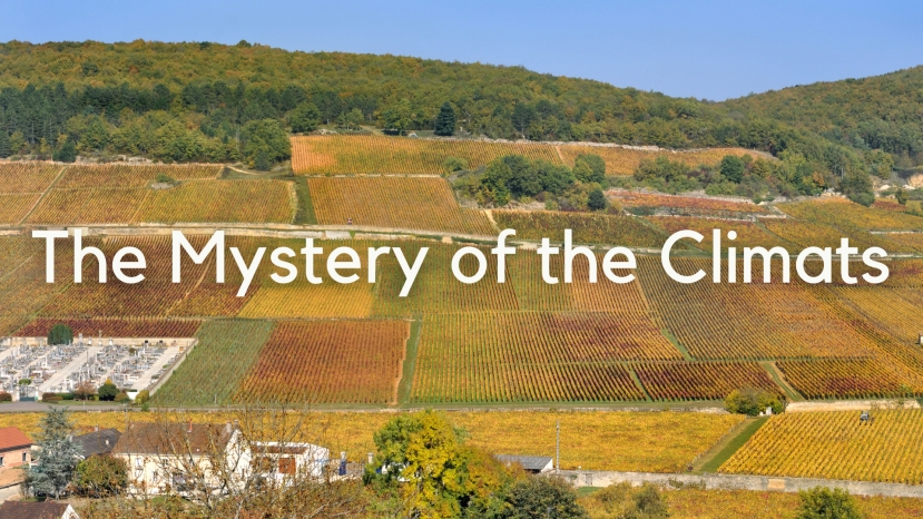 The Mystery of the Climats: History, Evolution & Name Origins of Bourgogne's Greatest Vineyards with Tanya Morning Star Darling